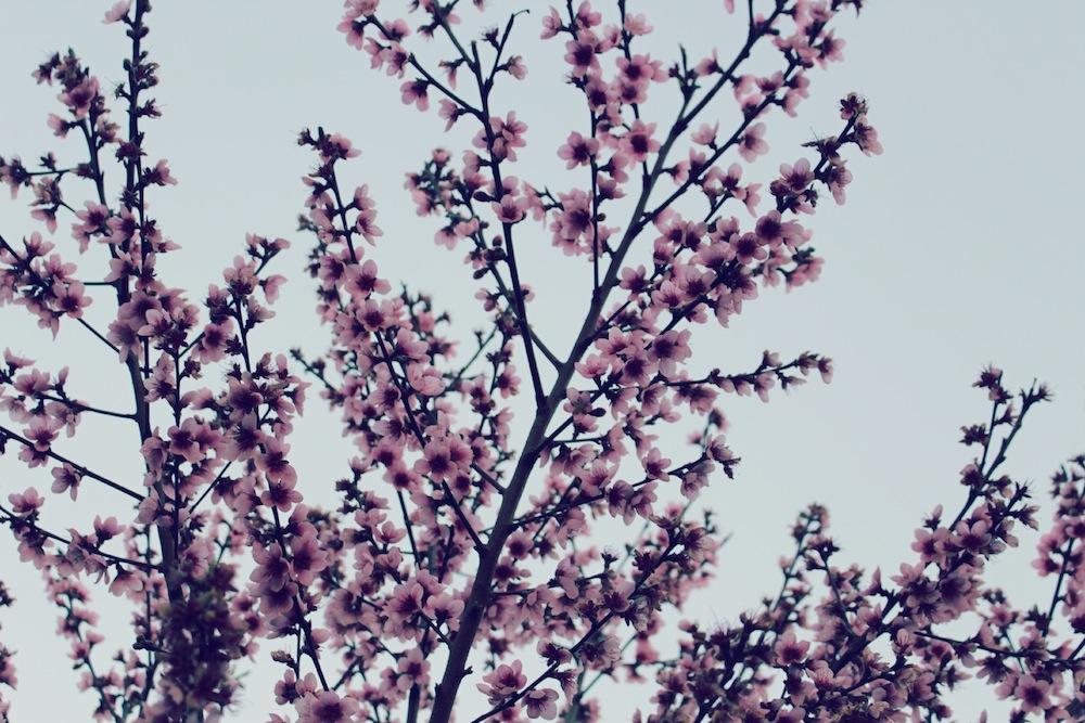 flor de pessego